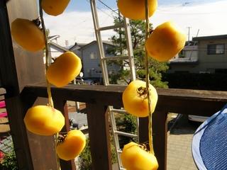 hoshigaki01.jpg